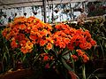 Orange flower cluster by sankar.jpg