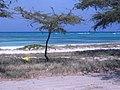 Oranjestad -Aruba - panoramio.jpg