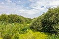 """Osterholz-Scharmbeck, Naturschutzgebiet """"Breites Wasser"""" -- 2018 -- 3015.jpg"""