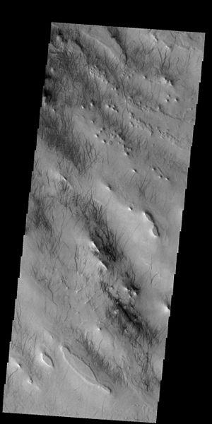 File:PIA21294 - Dust Devil Tracks.jpg