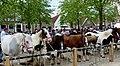 Paardenmarkt Heenvliet 2018 - paarden.jpg