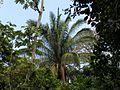 Palm - Flickr - treegrow.jpg