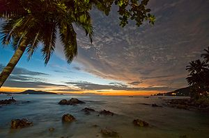 Palm tree at dawn, Patong Beach, Phuket Provin...