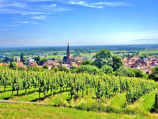 Panorama sur Soultz, depuis le vignoble du Hornstein. (3)