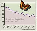 Papillons prairies.jpg