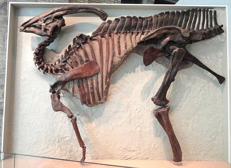 باراصورولوفوس ديناصورات إعادة إحياء الديناصورات