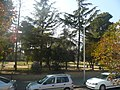 Parc Nadal P1370686.JPG
