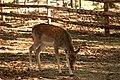 """Parcul de Animale - """"Moara de Vant"""" (8110111833).jpg"""