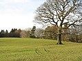 Parkland at Llwyn y Brain - geograph.org.uk - 319666.jpg