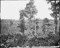 Part of Resaca battlefield, Ga., 1864 - NARA - 528867.tif