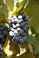 Paseo del Vino Winery (16986141605).jpg