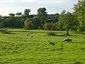Pasture, Stoke Lyne - geograph.org.uk - 867777.jpg