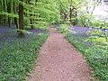 Path through wood at Mop End - geograph.org.uk - 1982746.jpg