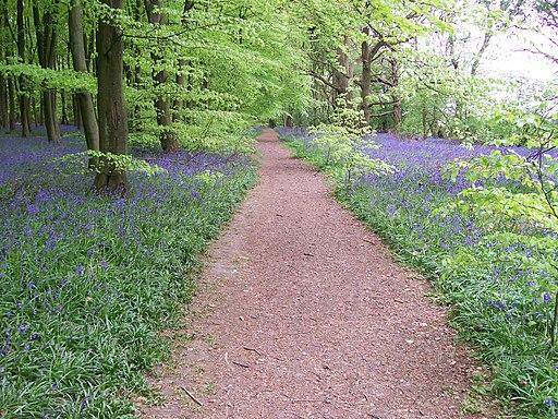Path through wood at Mop End - geograph.org.uk - 1982746