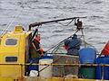 Pesca de centolla en la Bahía Ushuaia 14.JPG