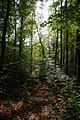 Pfad im Hartwald - geo.hlipp.de - 14032.jpg