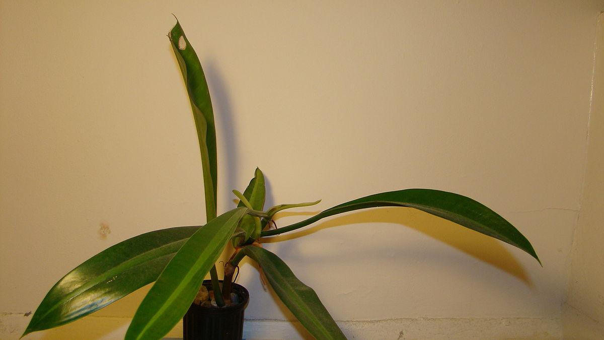 Dark Bamboo Shades