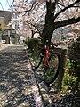 Philosopher'sPath @Kyoto - panoramio.jpg