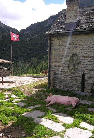Extensive farming - A small farm in the Swiss mountains. The land here is mostly rock and the slopes are very steep – likely unusable for agriculture, but can provide productive conditions for pigs