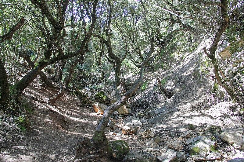 פארק לאומי ברעם