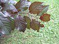 Plant1E.jpg