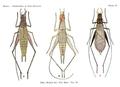 Plate17 BSNH Proceedings1920.png