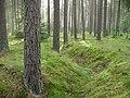 Poland. Gmina Jedwabno. Forests 009.JPG