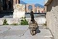 Pompeii (39548152941).jpg