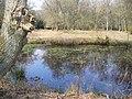 Pond at Shortfield Common - geograph.org.uk - 384004.jpg