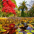 Pond in botanical garden.jpg