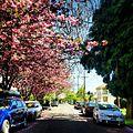 Portlandia (8285653549).jpg