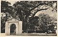 Postal del Monumento Samán de Güere.jpg