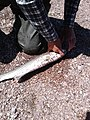 Pres de la poissonnerie Caron - 09.jpg