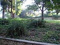 Prospect Park Lawn, Redlands, CA 7-7-12a (7597949340).jpg