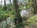 Pyrtle Spring, Bucks - geograph.org.uk - 1261542.jpg