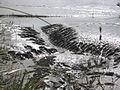 Quantum Mud - geograph.org.uk - 740006.jpg