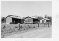Queensland State Archives 4732 Homestead and curing barns Clare c 1952.png