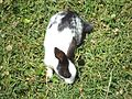 Rabbit in green grass.jpg