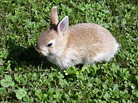 Rabbit small.JPG