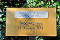 Rapperswil - Duftrosengarten - Shocking Blue FL Kordes 1974 2010-08-29 16-25-36.JPG