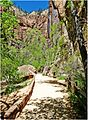 Rare Solitude, Riverside Walk, Zion NP 5-1-14zl (14295420779).jpg