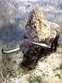 Reconstitution d'un bison d'Europe 2.jpg