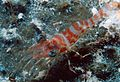 Reef1149 - Flickr - NOAA Photo Library.jpg