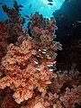 Reefscape.jpg