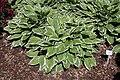Rhododendronpark Bremen 20090513 133.JPG