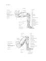 Richer - Anatomie artistique, 2 p. 141.png