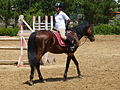 Riding a Horse Backwards 1110805.jpg