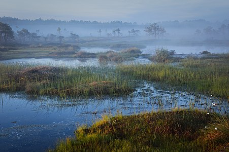 Riia Bog at early morning hour