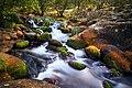 Rio Lozoya (37671198636).jpg