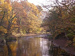 River Goyt in Woodbank Park - geograph.org.uk - 730720.jpg